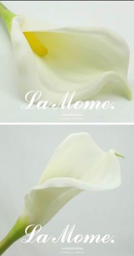 [協貿國際]單枝仿真花簡約現代白色PU馬蹄蓮高品質仿真花擺放花樣板房