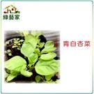 【綠藝家】A33.青白杏菜種子15000...