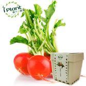 iPlant積木小農場-櫻桃蘿蔔