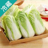 越南娃娃菜200G/包【愛買冷藏】