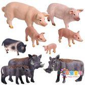 仿真越南豬小豬公母豬野豬疣豬模型動物模型兒童玩具辦公室擺件
