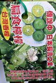 台灣香檸 扁食檸檬苗盆栽 4吋黑盆活體盆栽, 可食用