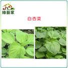 【綠藝家】A13.白杏菜種子15000顆