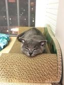 貓抓板磨爪器耐磨大號瓦楞紙貓窩貓沙發貓磨爪玩具貓爪板貓咪用品 扣子小鋪
