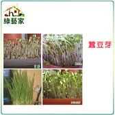 【綠藝家】大包裝蠶豆芽種子450克(約300顆)(蠶豆芽菜種子)