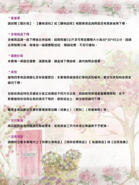 花花世界_香草植物--迷迭香--(神聖之草)/8吋/高50-60公分/TC