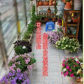 花卉種子 花種籽子春季播種套餐室內室外四季易種易活開花不斷陽臺庭院盆栽-凡屋