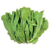 萵苣菜約250g*2包★安全蔬菜