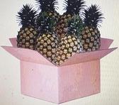 [COSCO代購] W4206 產銷履歷金鑽鳳梨 10公斤