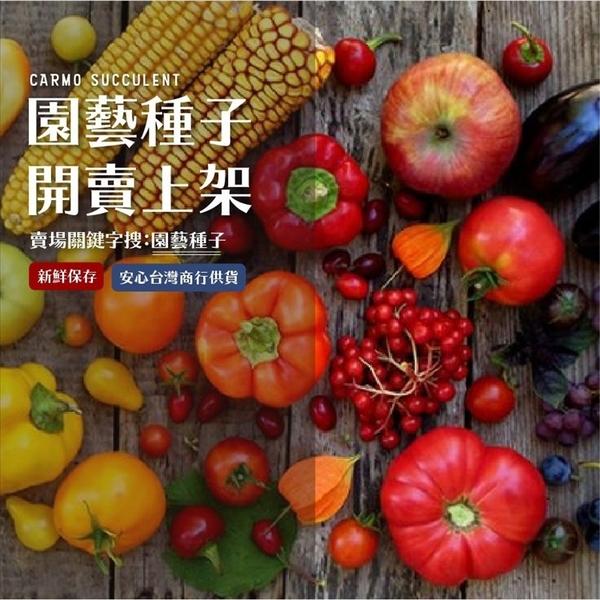 CARMO彩色胡蘿蔔種子 園藝種子(1g) 【FR0026】