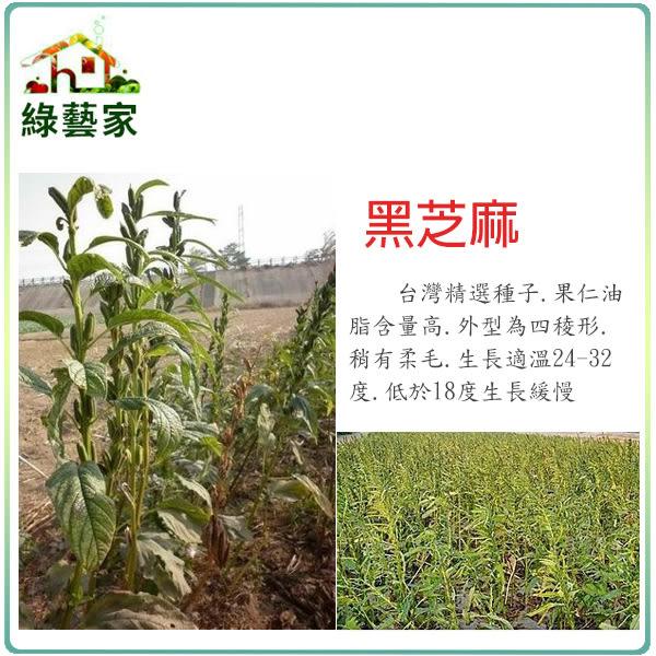 【綠藝家】G64.黑芝麻(胡麻)種子3000顆