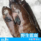 【台北魚市】  野生藍斑 400g±10...