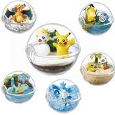寶可夢 飼育生態球 擺飾 盒玩 第二代 Pokemon 神奇寶貝 日本正品 該該貝比日本精品 ☆