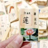 木丸子100片兒童積木多米諾骨牌雙面漢字認字識字木制積木玩具 居享優品