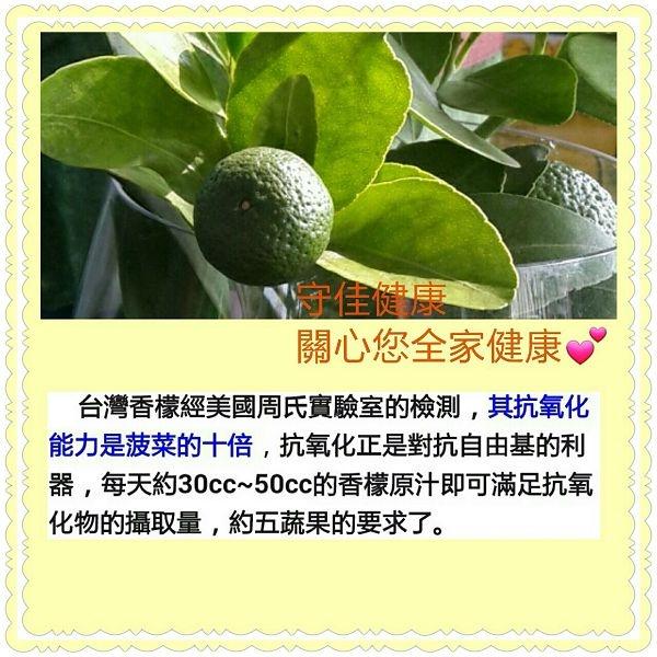 【台灣香檬】台灣香檬茶包(20包/罐)x3盒 含運價1350元