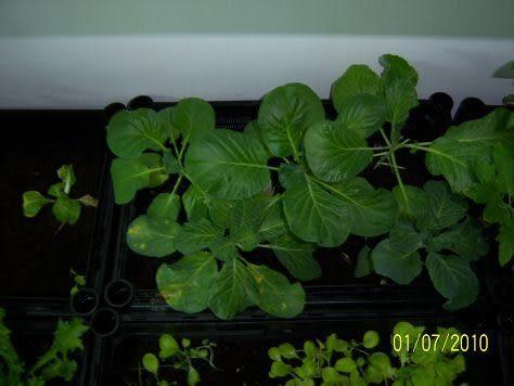 大功率led植物生長燈12W、室內、戶外、陽台全功用型,加速植物種植成長,直接補日照不足