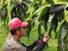 [宜蘭]採果體驗-綠寶石休閒農場(原發8...