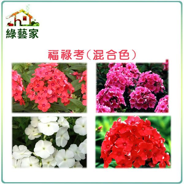 【綠藝家】大包裝H36.福祿考(混合色,高25~30cm)種子450顆