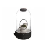 Green Pandora LED植栽燈/還要等多久/黑色/香蜂草