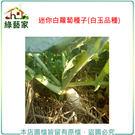 【綠藝家】C12.迷你白蘿蔔種子100顆...