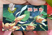 [金玉蘭花盆栽 黃色玉蘭花] 4寸黑軟盆 室外花卉 多年生觀賞花卉盆栽