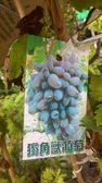 水果苗 ** 獨角獸葡萄 ** 4吋盆/ 高 10公分 / 新品種葡萄【花花世界玫瑰園】R