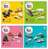 扭蛋 【日版】休眠動物園 ZOO寢睡動物園 柯基柴犬模型擺件 扭蛋緣子 二度3C