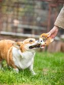 GiGwi貴為甜甜圈狗狗玩具毛絨橡膠玩具發聲仿真磨牙耐咬寵物玩具