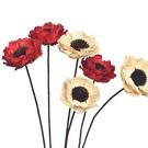 【虞美人乾花】天然植物藝術手工乾花瓣,花朵直徑約6公分*長30公分,單朵價