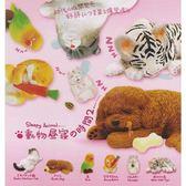 全套6款【正版授權】動物午休時間 P2 第二彈 扭蛋 轉蛋 休眠動物 擺飾 - 003378