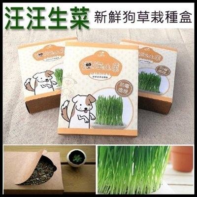 『寵喵樂旗艦店』《汪汪生菜》新鮮狗草栽種盒
