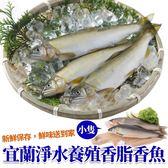 買10隻送10隻【海肉管家-全省免運】宜蘭母香魚 共20隻(每隻約60-70g)