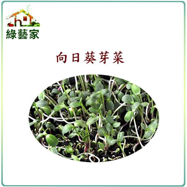 【綠藝家】大包裝向日葵芽種子300公克(向日葵芽菜種子)