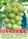 花花世界_水果苗---**日本桃太郎葡萄**---新品種/4吋盆/高40-60公分/Ts