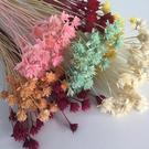 永生花花材,小山花,一支裝(如花頭偏小.會附2-3支)