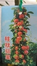 水果苗 ** 柱狀蘋果(粗) ** 4吋盆/高10-55cm/平地可結果【花花世界玫瑰園】S