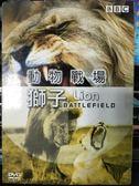 影音專賣店-P08-338-正版DVD-電影【動物戰場 獅子】-BBC 自然動物生態類