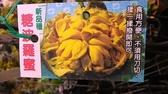 花花世界_水果苗--蜜糖波羅蜜-- 麻糬種蜜糖波羅蜜/4吋盆/高30-50cm/Ts