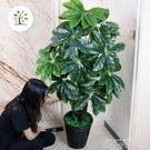 假發財樹仿真植物綠植擺件滴水觀音家居大型客廳落地裝飾室內假花 依凡卡時尚