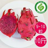 產銷履歷陳家火龍果-紅肉10台斤/箱 (9-10粒)