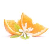 Visakha - 甜橙 Orange Sweet  單方精油 (100ml)