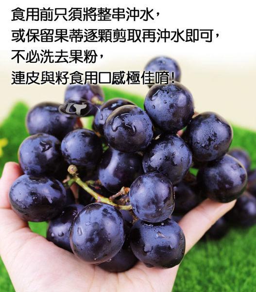【果之家】苗栗卓蘭特級巨峰葡萄4.5台斤裝