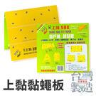 台灣製造 上黏 黏蠅板  5張入/包 黏...