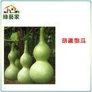 【綠藝家】大包裝G32.葫蘆匏瓜種子150顆