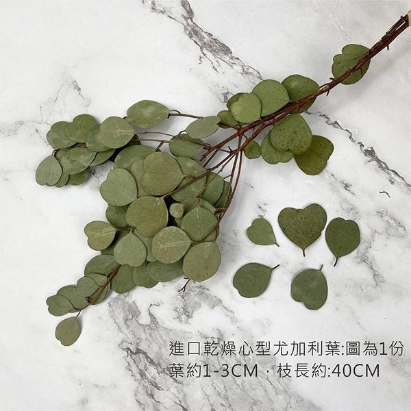 進口乾燥心型尤加利葉 -不凋乾燥花圈 乾燥花束 不凋花 拍照道具 室內擺飾 -50元/束