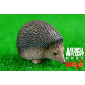 【MOJO FUN 動物模型】動物星球頻道獨家授權 - 刺蝟 387035