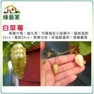 【綠藝家】I08.糖果草莓種子(白色.英...