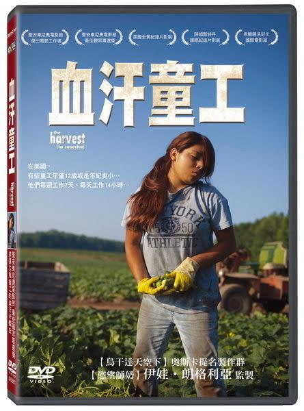 血汗童工 DVD (購潮8)