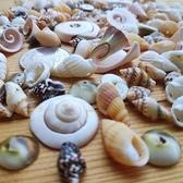 一佳寵物館 水族造景迷你小號天然打孔海螺貝殼套裝工藝品飾品裝飾diy配件