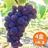 【樂品食尚】卓蘭特產-產地直送巨峰葡萄5斤x4盒(6串/盒)